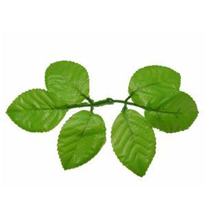 Листья розы зеленое