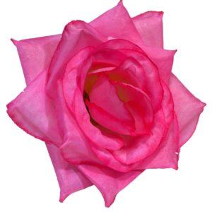 Роза средняя хлопок