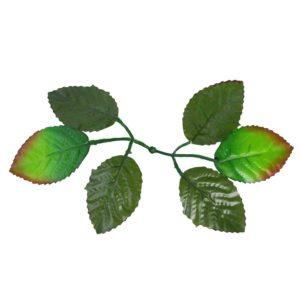 Листья розы с темными листьями