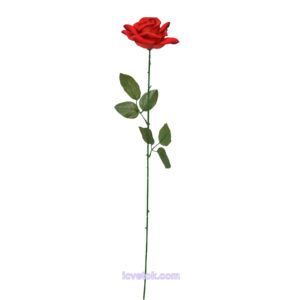 Бархатная роза на ветке