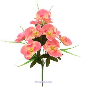 Орхидея средняя
