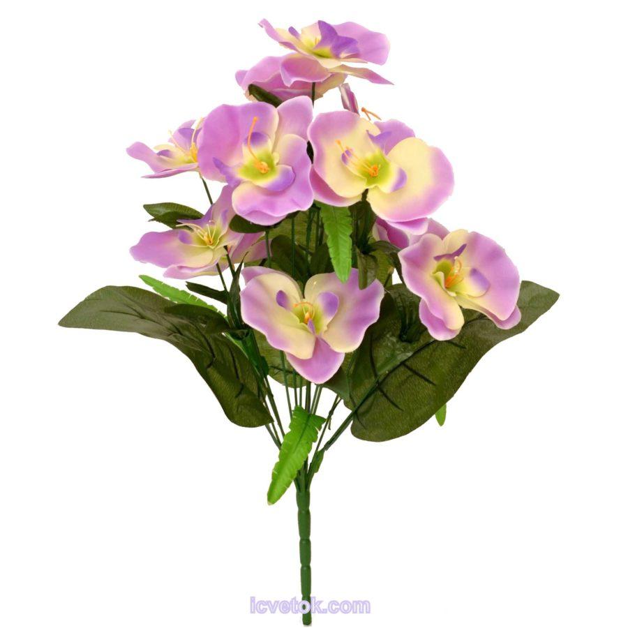 Орхидея с боковыми листьями