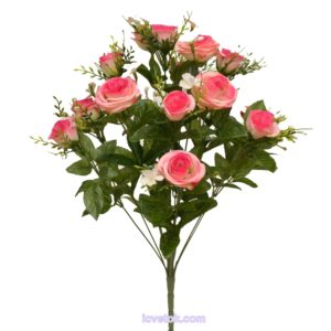 Роза семейка