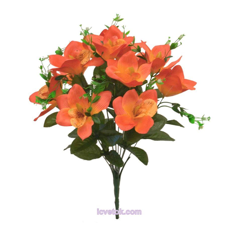 Орхидея-ирис