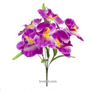 Орхидея атласная дешевая